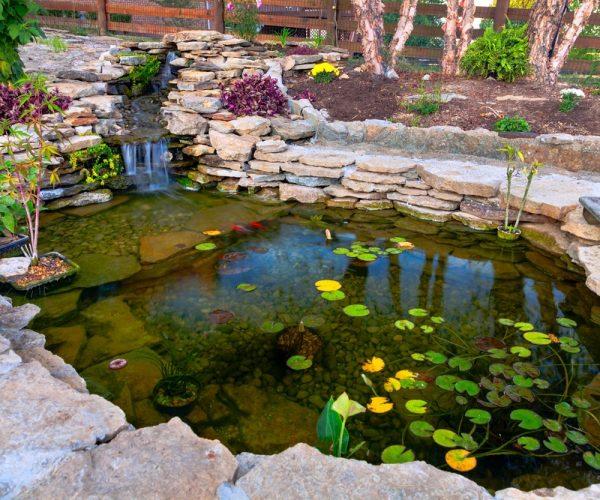Oczko wodne – jak zacząć i na co zwrócić uwagę?