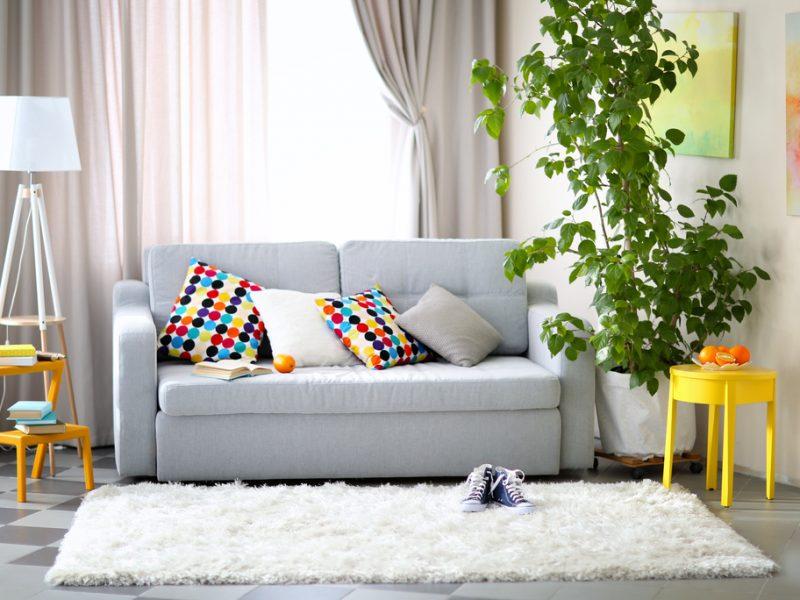 Apretura – najlepszy sposób na odświeżenie dywanu!