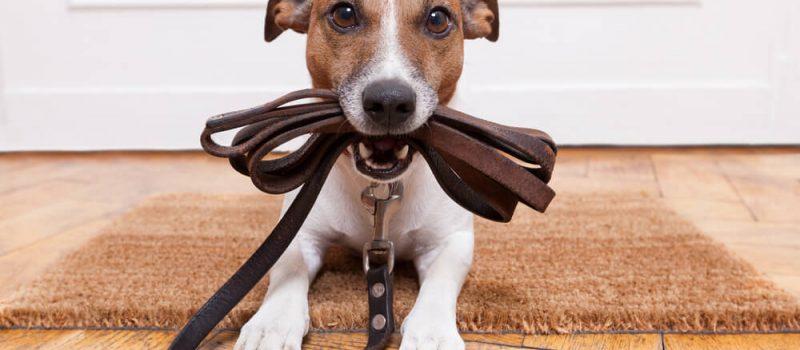 Kiedy należy wykonać odrobaczenie psa?